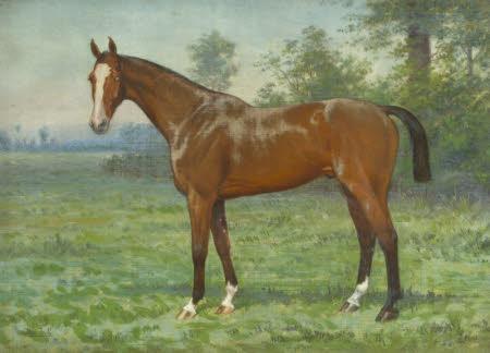Belgrove, a Hunter