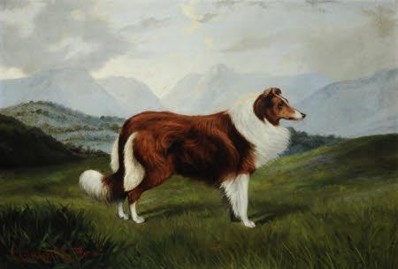 'Christopher', Collie Dog in Lake District Landscape