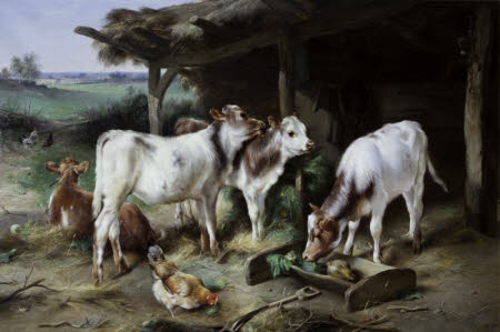 Calves and Poultry