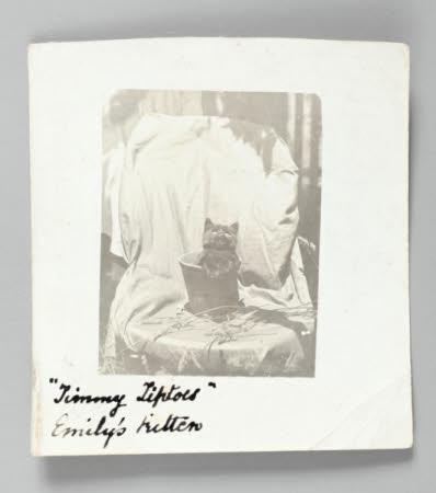 Timmy Tiptoes, Emily's kitten