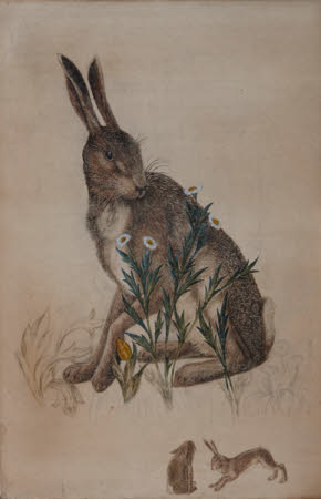 The Hare (for 'The Forest', a tapestry by Morris & Co.)