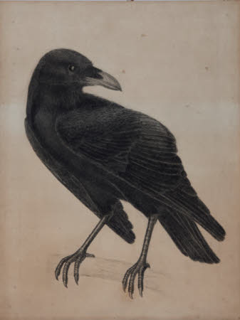 The Raven (for 'The Forest', a tapestry by Morris & Co.)