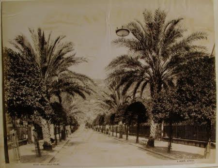 Nervi, Viale delle Palme.
