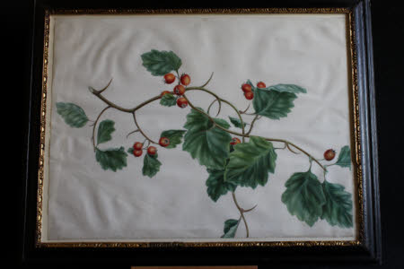 Cockspur Thorn
