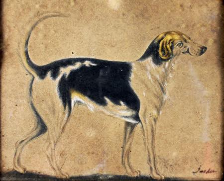 A Hound called 'Jasper'