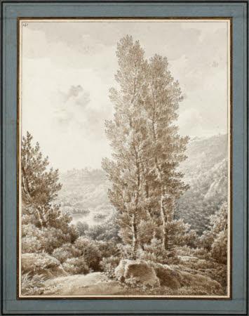 Study of Trees on Banks of Lake Nemi
