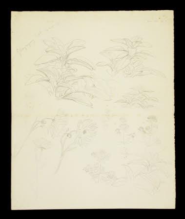 Foliage at Gwaynynog