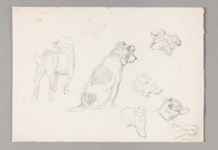 Study of dogs