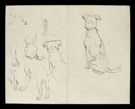 Studies of a dog