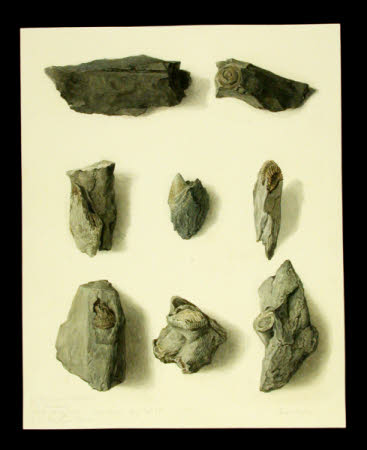 Fossils found at Troutbeck