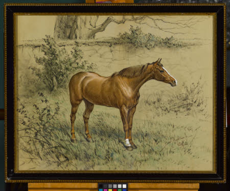 A Chestnut Horse by a Wall.