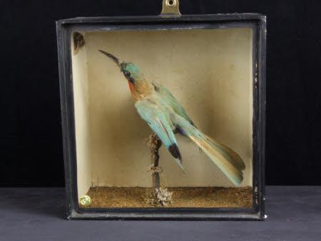 Bishop bird