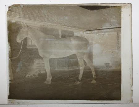 Photographc print