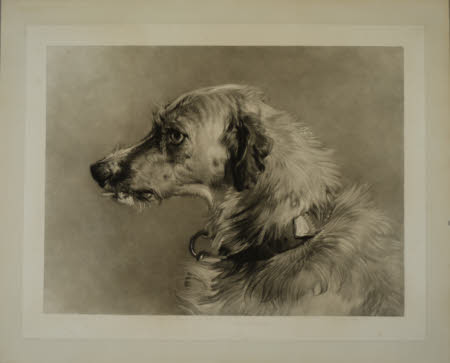 Head of a Dog (after Sir Edwin Henry Landseer)