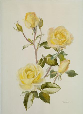 The Golden Rose Book
