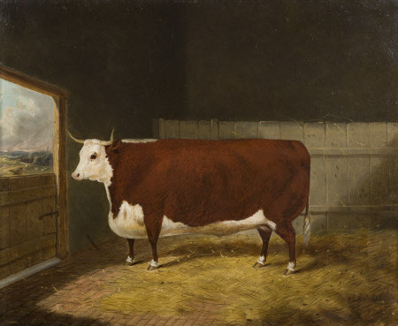 A Prize Bull in a Barn